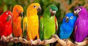 you-are-unique-birds